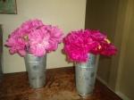 Peony Flower Share week