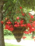 Discovered Fabulous Moss Cone Hanging Basket
