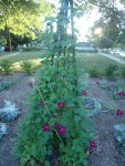 School garden growing more every year